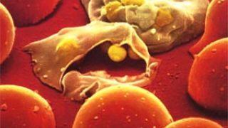 Apartar a un bebé de la malaria por menos de 1 euro al año