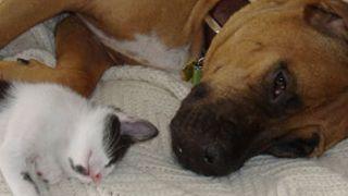 Escoger una mascota: ¿perro o gato?