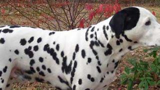 Adoptar un perro callejero ¿puedo asegurarlo?