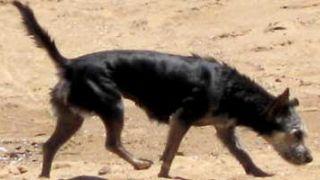 Seguros de mascotas: una garantía de tranquilidad