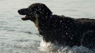 ¿Qué debes saber de un seguro de mascotas?