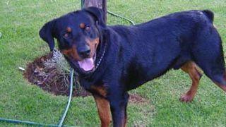 Cómo usar un comparador de seguros de perros