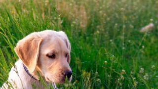 ¿Qué debe cubrir mi seguro de mascotas?